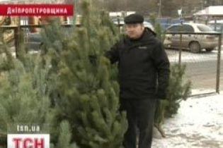 Ялинки у Криму готують до вирубки