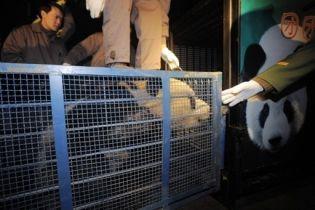 Китай зробив крок назустріч Тайваню: подарував двох панд