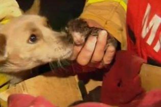 Собака ціною власного життя рятував кошенят (відео)