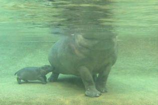 У берлінському зоопарку представили нового мешканця