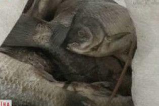 У Бердичеві мешканці підтопленого будинку розводять у підвалі рибу