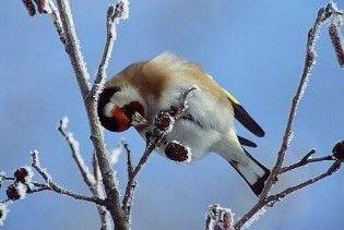 Погода в Україні на вівторок, 15 грудня