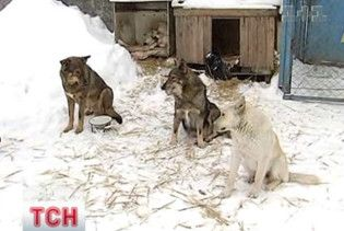 Київські ветклініки переповнені тваринами, які постраждали через ожеледицю