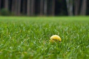 Британку вбило м'ячиком для гольфу