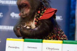 Мавпа обіграла найкращих російських брокерів