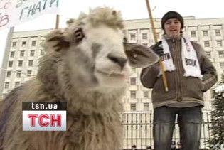 Противсіх зігнав під ЦВК стадо баранів