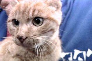 Американські автолюбителі врятували приклеєного до дороги кота