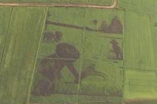 У Таїланді створили величезну картину на рисовому полі