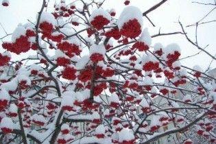 Погода в Україні на четвер, 17 грудня