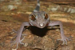У долині Меконгу знайдені 163 нові види флори і фауни