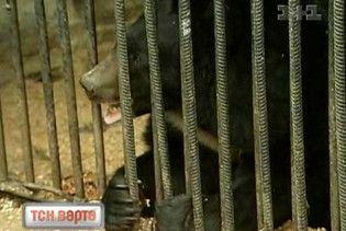 У Київському зопарку гинуть тварини