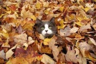 Погода в Україні на четвер, 12 листопада