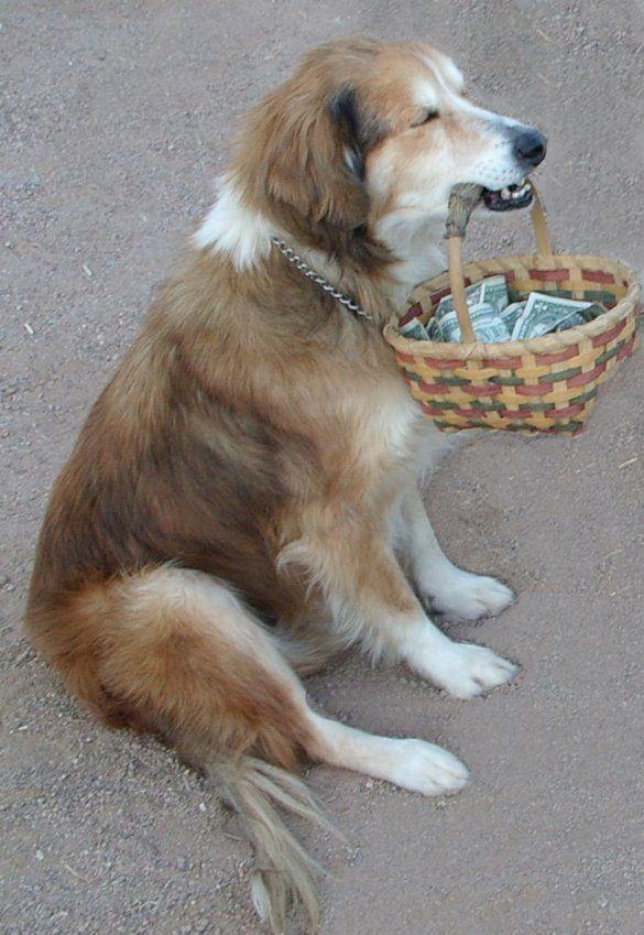 собака з грошима