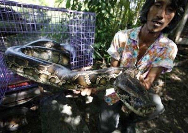 Житель Бангкоку навчив ящірку грати на гітарі