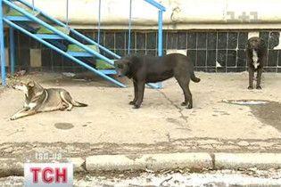 """У Києві пройшов мітинг проти """"зооциду"""": собак труять токсинами"""