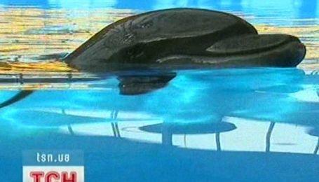 Дельфіни які лікують дітей