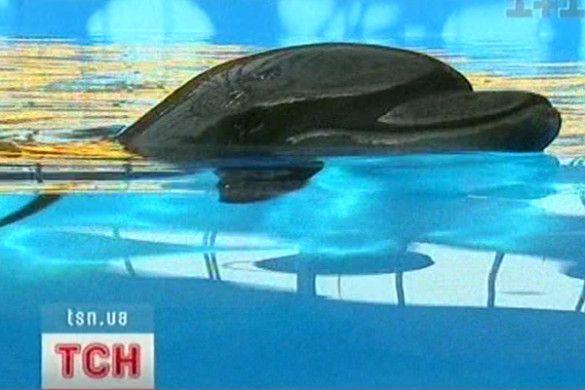 Дельфін
