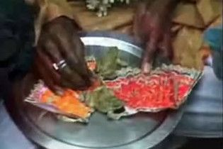 Індійські священики одружили двох жаб