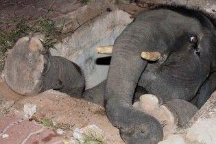 В Таїланді рятували слона, що провалився в люк на дорозі