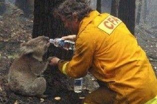В Австралії померла коала, що була символом надії континенту