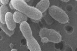 Учені воскресили бактерії, яким 120 тисяч років