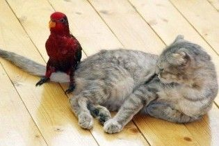 Коти виявилися дурнішими за птахів