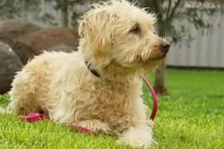 Жителі Квінсленда знайшли собаку, що загубився 9 років тому