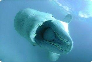 Путін попросив кита Дашу не сердитися