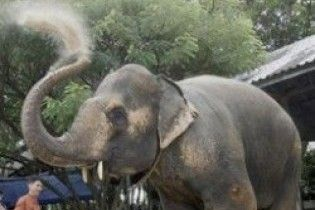 Слонові, який підірвався на міні, зробили протез ноги