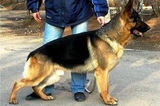 Під час виступу Обами американський кобель знюхався з російською собакою