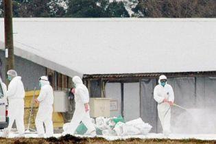 Пташиний грип у Чехії