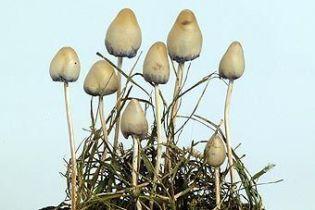 3-летний ребенок умер в результате отравления грибами