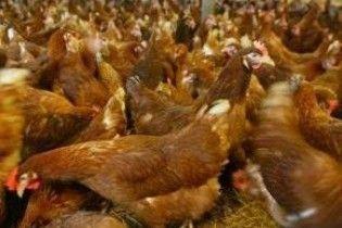 У Дагестані 400 людей побилися за птахофабрику