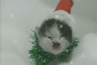 Різдвяні коти вчергове нагадують про наближення свят (відео)