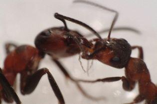 Вчені: терористи почнуть використовувати бойових жуків