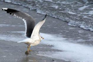На Одеські пляжі намивають свіжий пісок (відео)