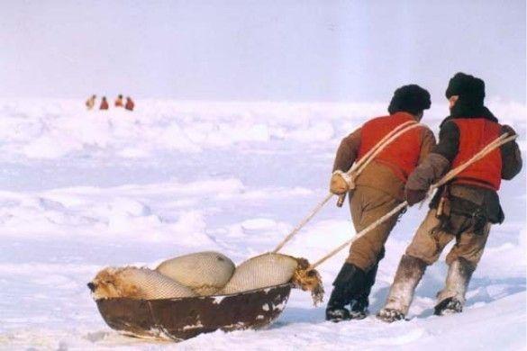 Мисливці на тюленів