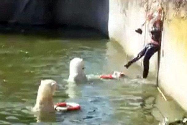 Німкеня намагалась викупатись у басейні з білими ведмедями
