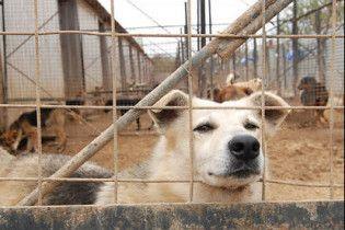 В Черкасах за кожного бродячого собаку дають по 10 гривень