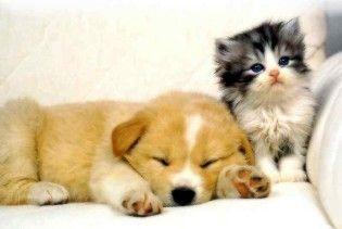У Києві запровадили платну реєстрацію котів і собак