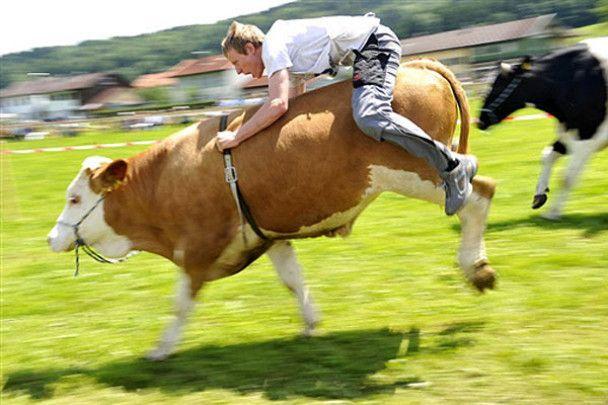 Голий спорт та перегони на коровах