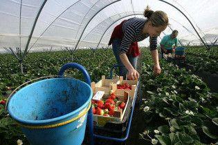 Українських заробітчан легалізують в Італії
