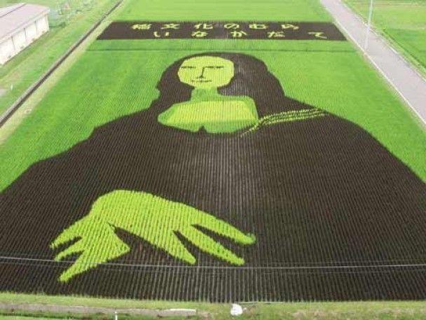 """Японці """"малюють"""" на рисових полях"""
