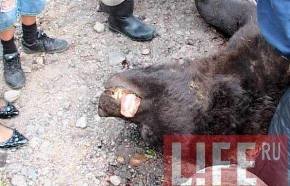 Напад ведмедя