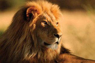 На кордоні Росії та України затримали лева-нелегала