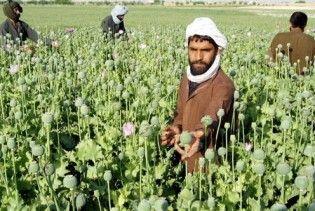 США відмовилися від програми знищення опійного маку в Афганістані