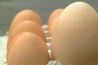 Курка знесла страусине яйце та здохла