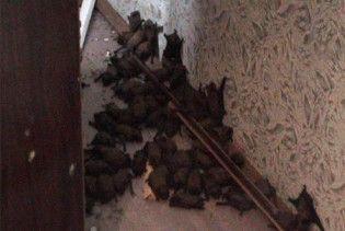 До квартири мешканки Чернівців увірвалися 74 кажани