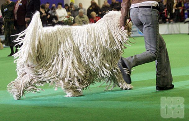 У Києві зібралися понад 4 тисячі гламурних собак