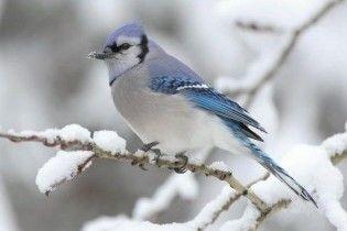 Погода в Україні на понеділок, 14 грудня